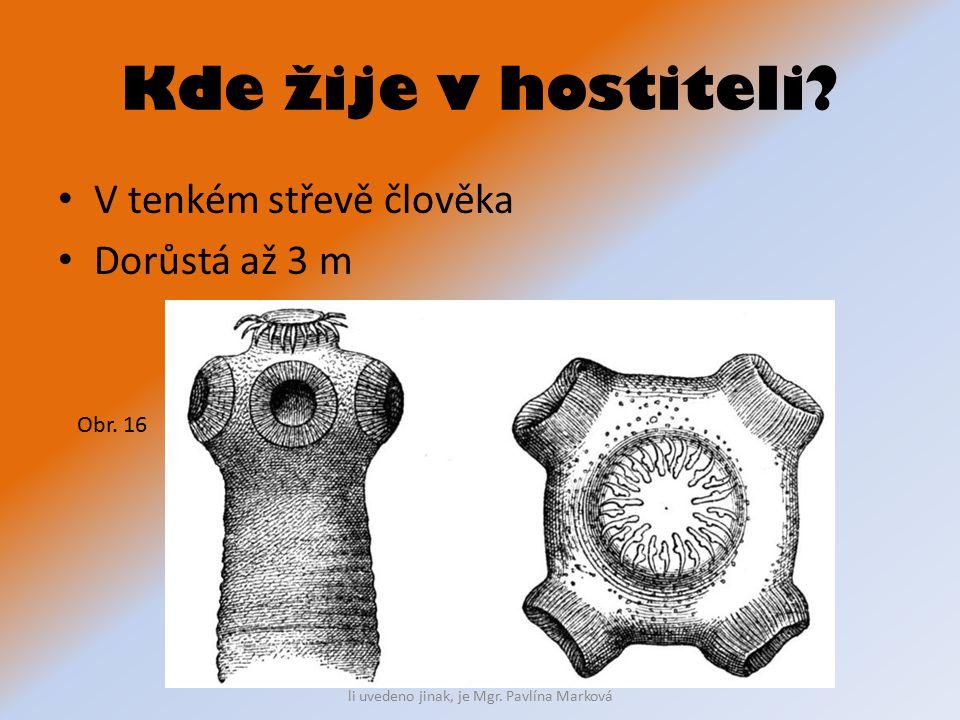 Kde žije v hostiteli V tenkém střevě člověka Dorůstá až 3 m Obr. 16