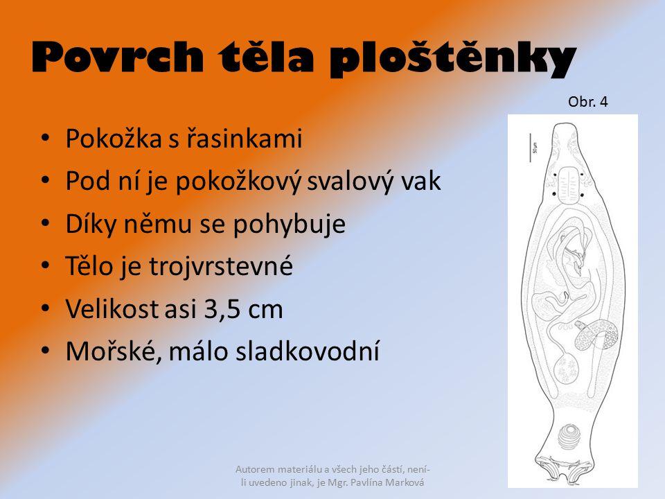 Povrch těla ploštěnky Pokožka s řasinkami