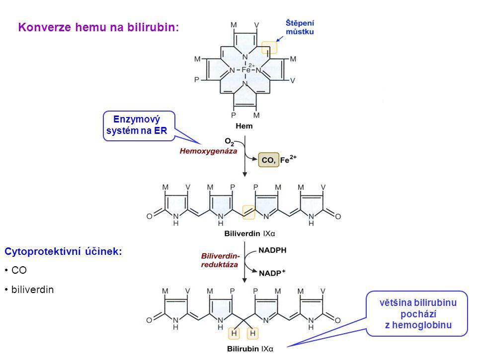 většina bilirubinu pochází z hemoglobinu