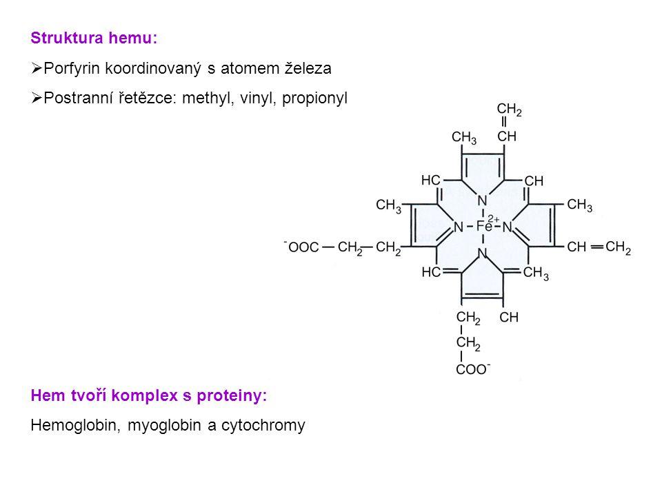 Struktura hemu: Porfyrin koordinovaný s atomem železa. Postranní řetězce: methyl, vinyl, propionyl.