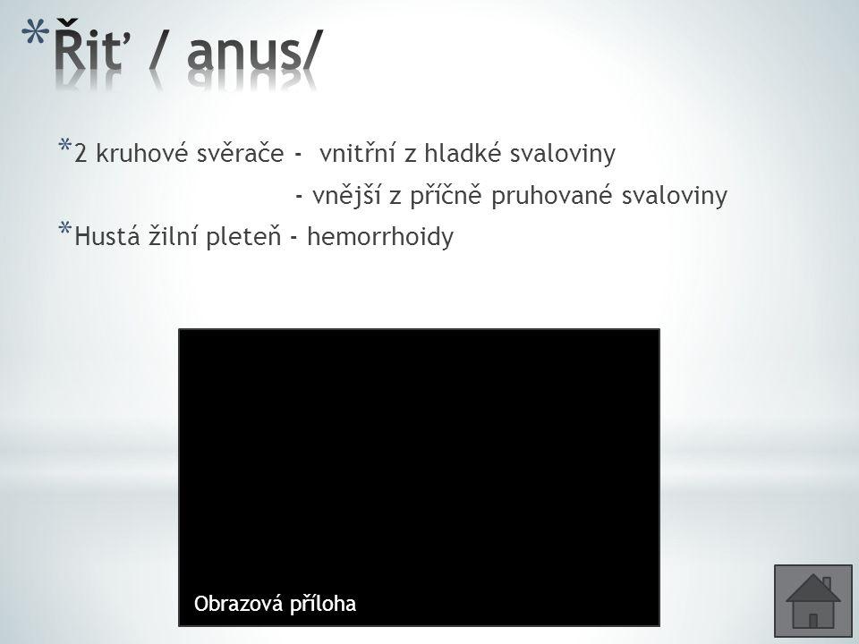 Řiť / anus/ 2 kruhové svěrače - vnitřní z hladké svaloviny