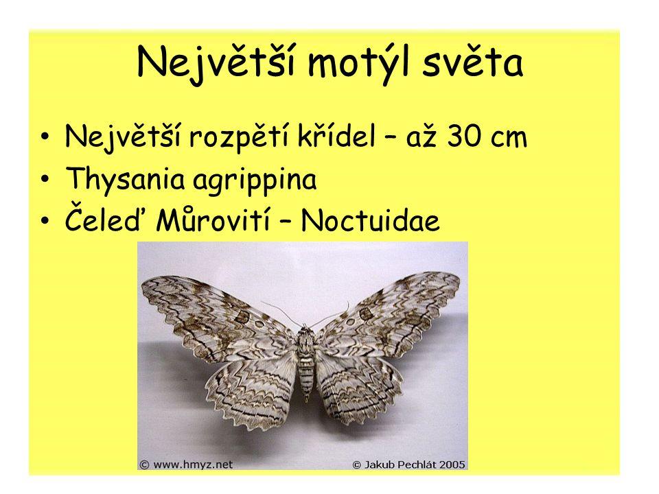Největší motýl světa Největší rozpětí křídel – až 30 cm