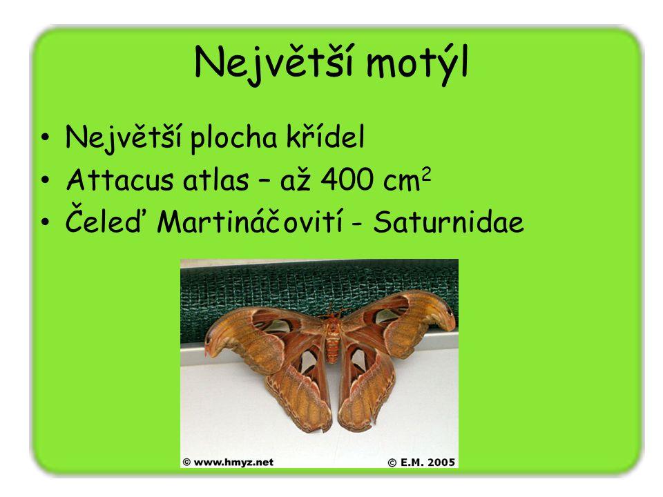 Největší motýl Největší plocha křídel Attacus atlas – až 400 cm2