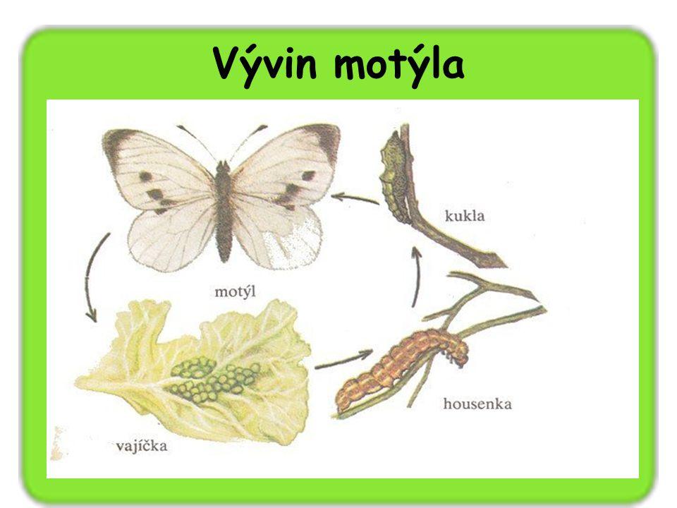 Vývin motýla