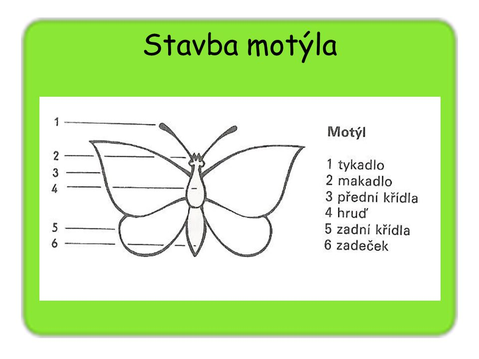 Stavba motýla