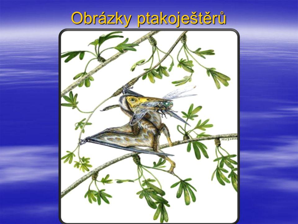 Obrázky ptakoještěrů