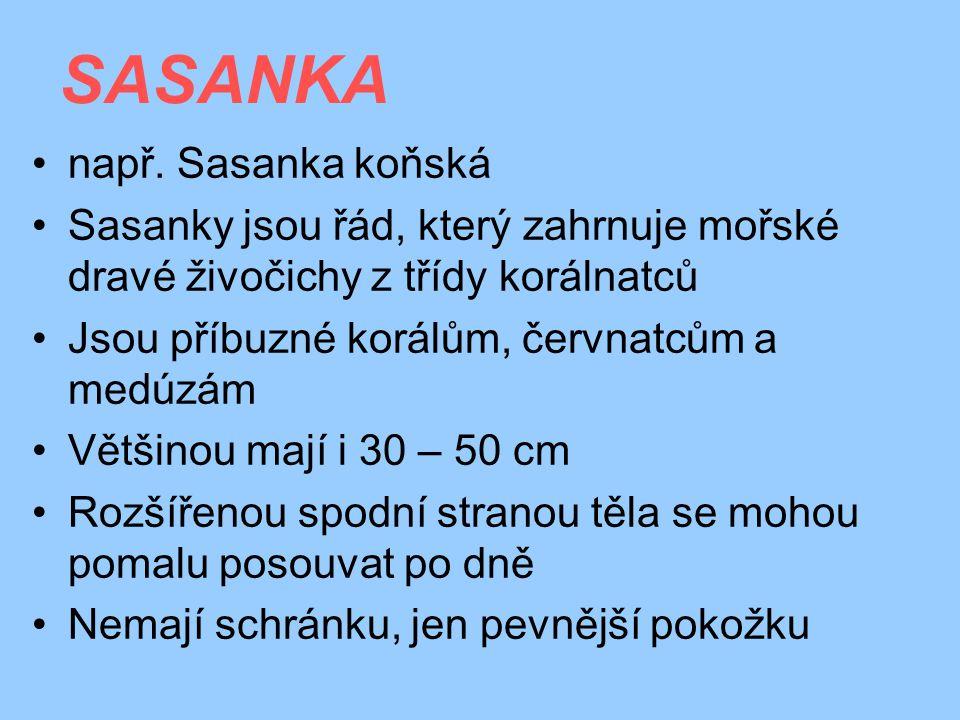 SASANKA např. Sasanka koňská
