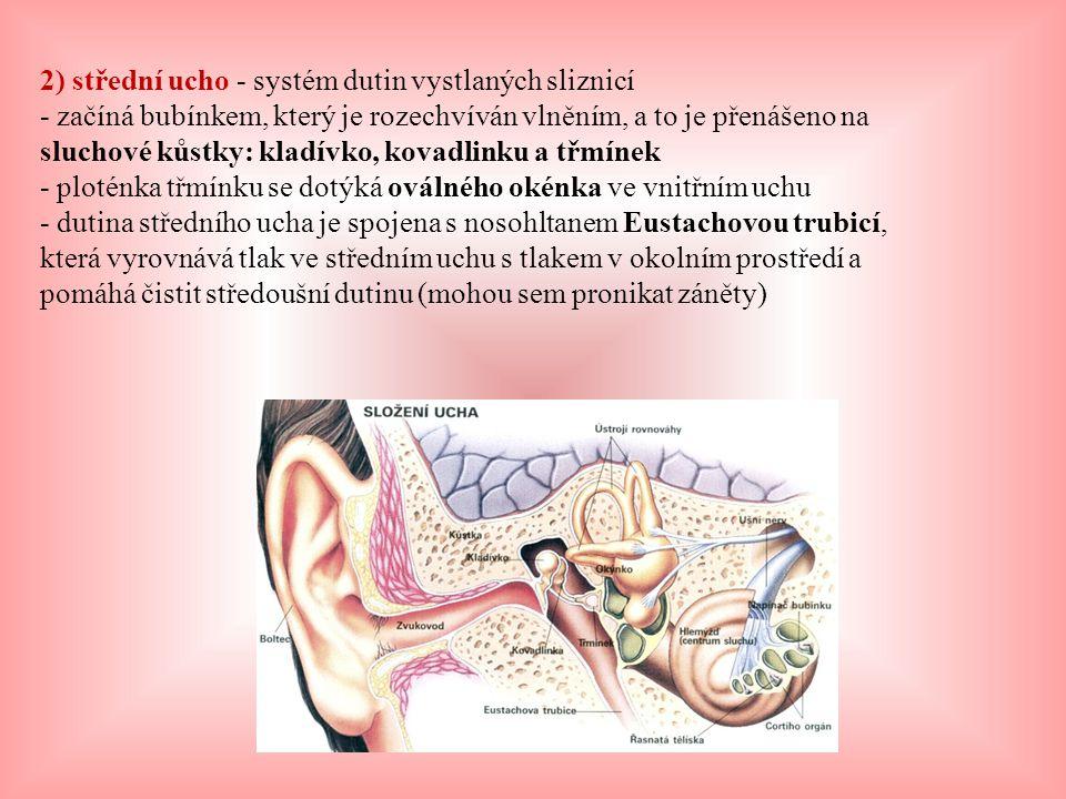 2) střední ucho - systém dutin vystlaných sliznicí