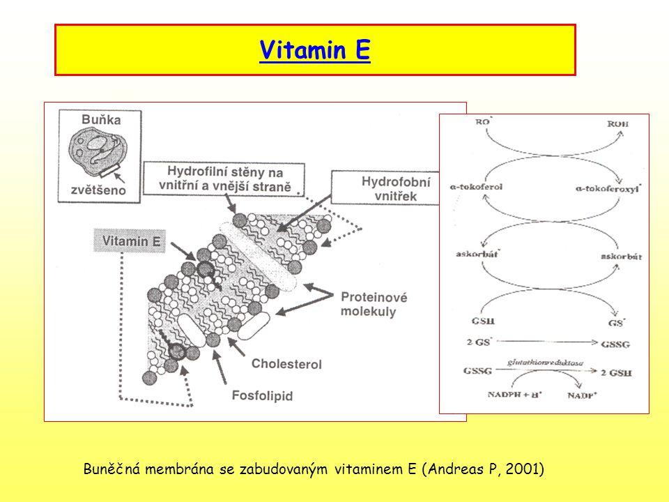Vitamin E Buněčná membrána se zabudovaným vitaminem E (Andreas P, 2001)