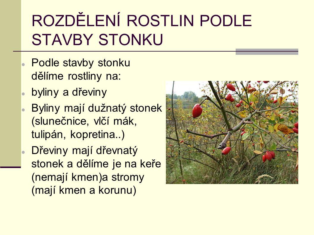 ROZDĚLENÍ ROSTLIN PODLE STAVBY STONKU