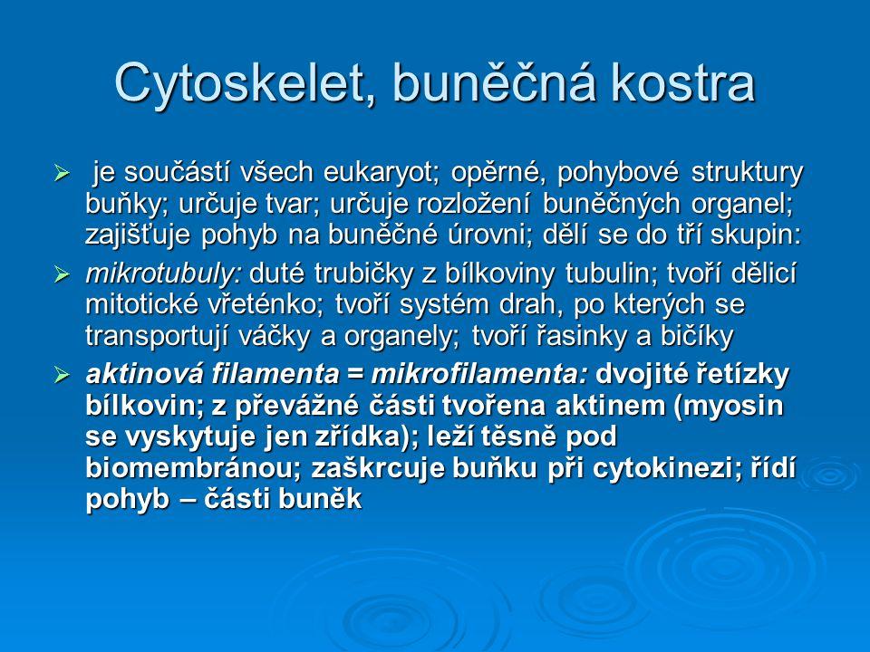 Cytoskelet, buněčná kostra