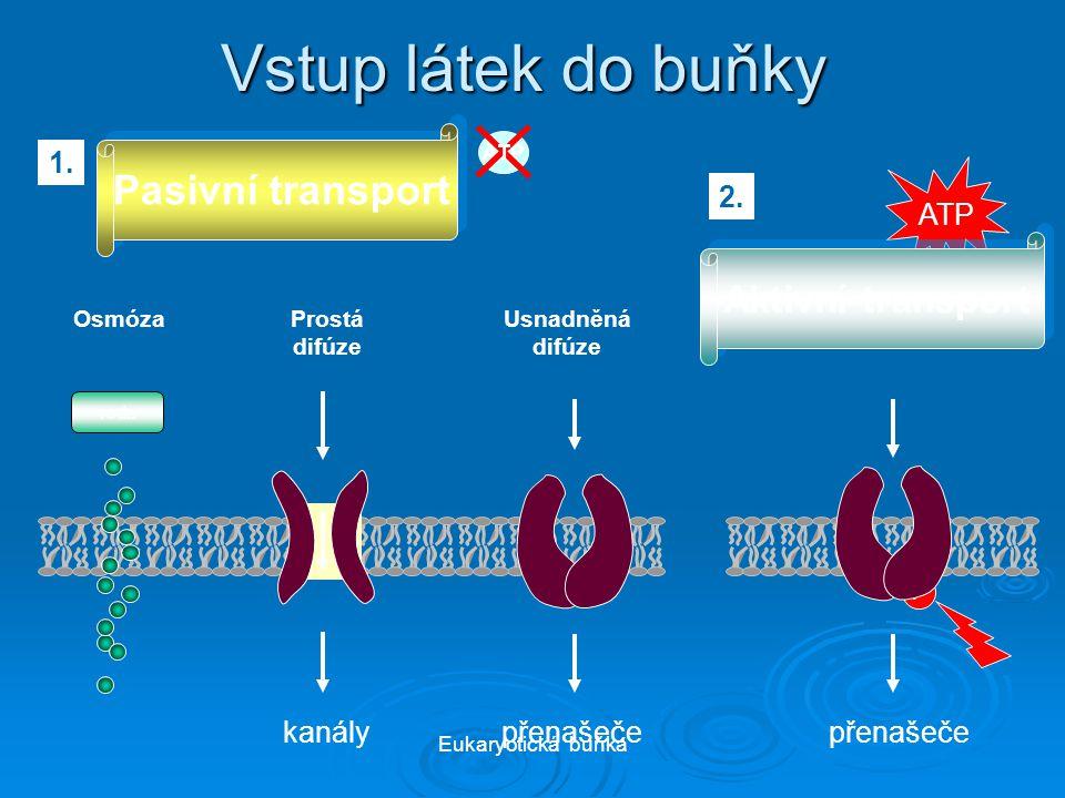 Vstup látek do buňky Pasivní transport Aktivní transport 1. ATP 2.