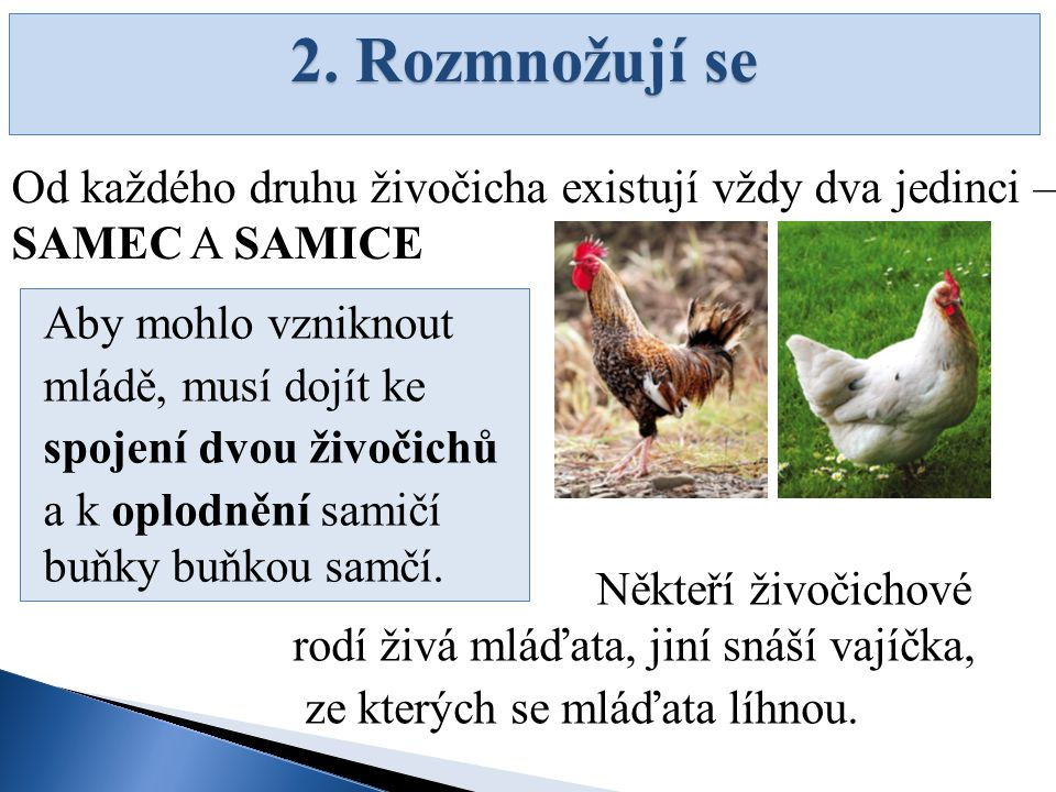 2. Rozmnožují se Od každého druhu živočicha existují vždy dva jedinci – SAMEC A SAMICE. Aby mohlo vzniknout.