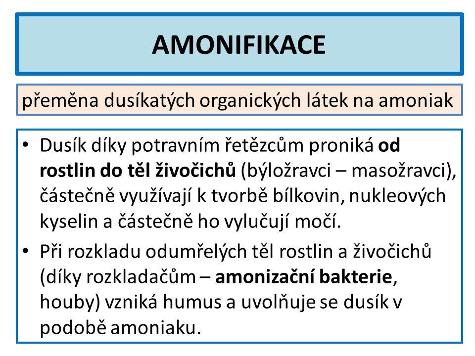 AMONIFIKACE přeměna dusíkatých organických látek na amoniak