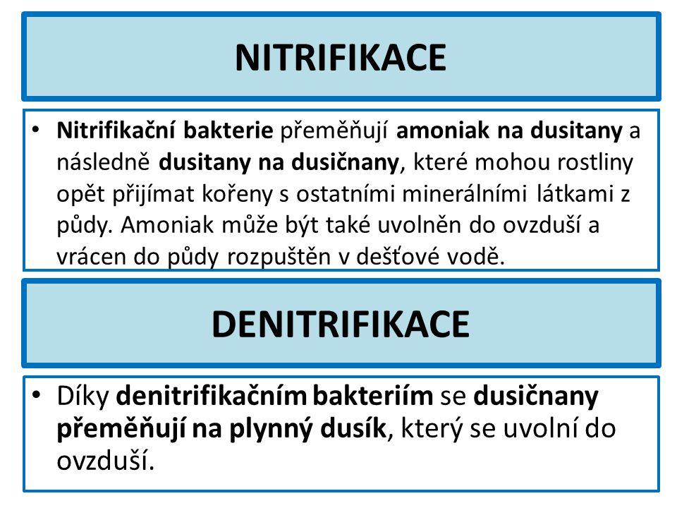 NITRIFIKACE DENITRIFIKACE