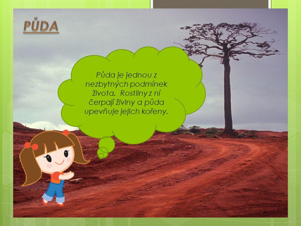 PŮDA Půda je jednou z nezbytných podmínek života.