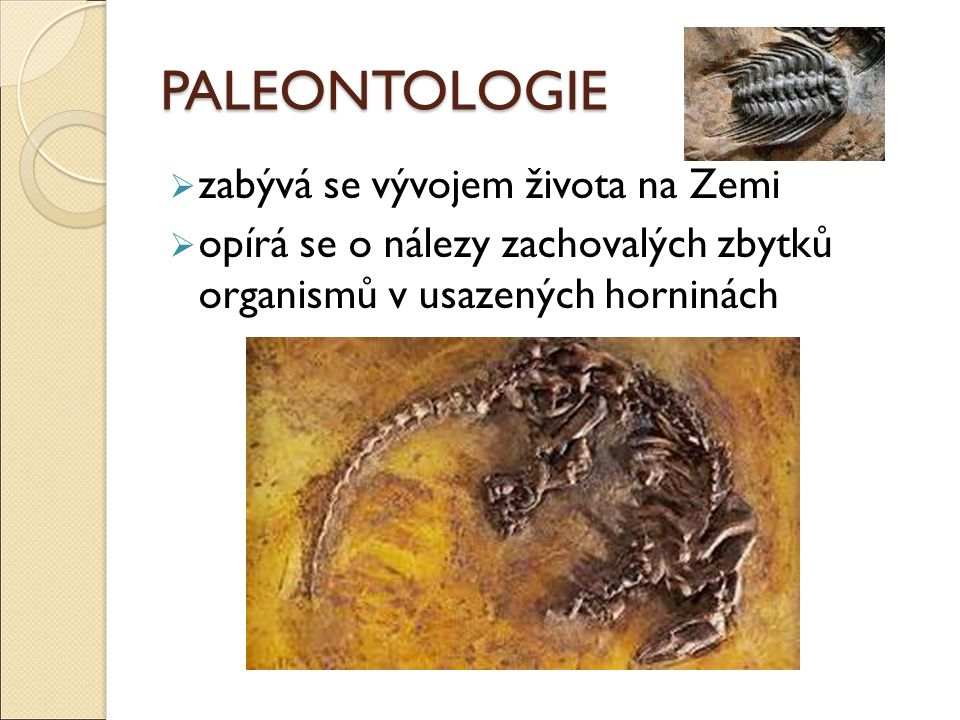 PALEONTOLOGIE zabývá se vývojem života na Zemi