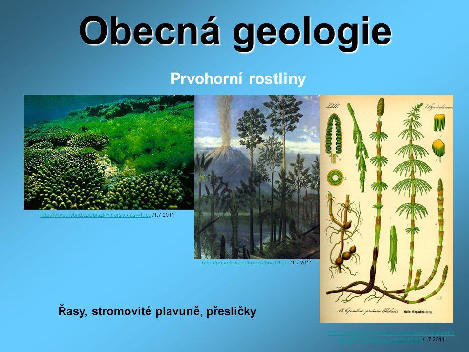 Obecná geologie Prvohorní rostliny Řasy, stromovité plavuně, přesličky