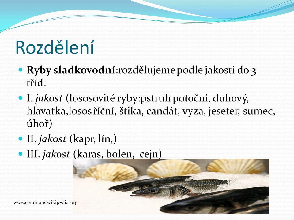 Rozdělení Ryby sladkovodní:rozdělujeme podle jakosti do 3 tříd: