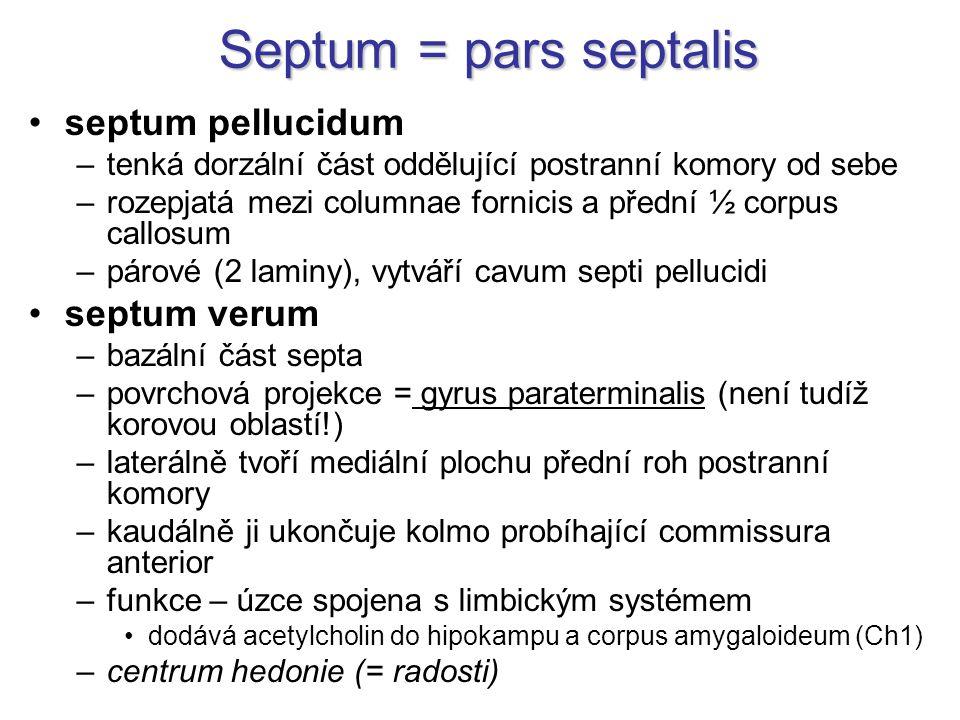 Septum = pars septalis septum pellucidum septum verum