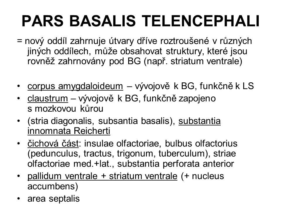 PARS BASALIS TELENCEPHALI