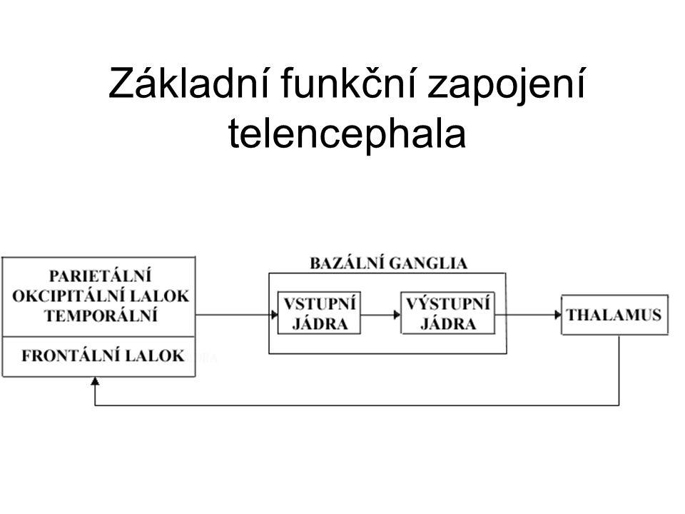 Základní funkční zapojení telencephala