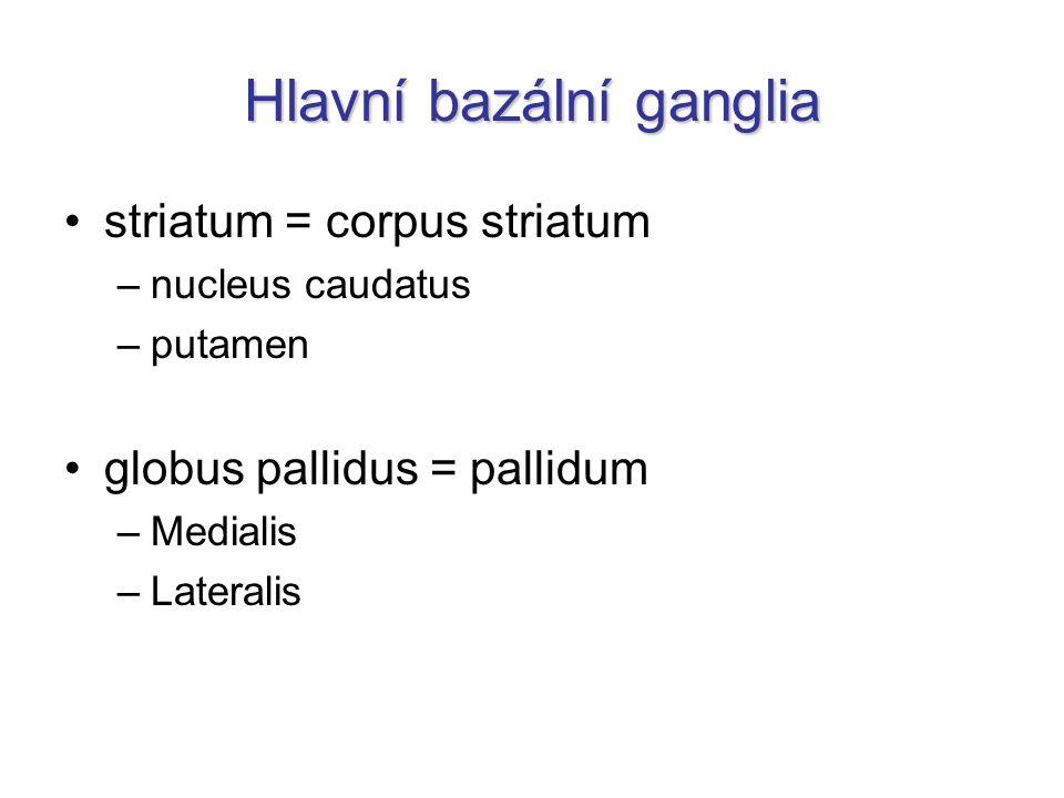 Hlavní bazální ganglia