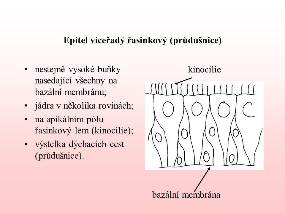 Epitel víceřadý řasinkový (průdušnice)