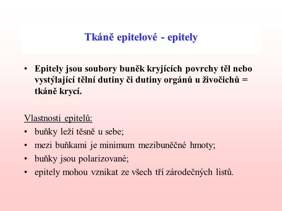 Tkáně epitelové - epitely