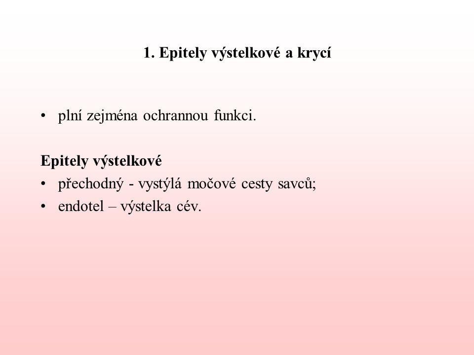 1. Epitely výstelkové a krycí