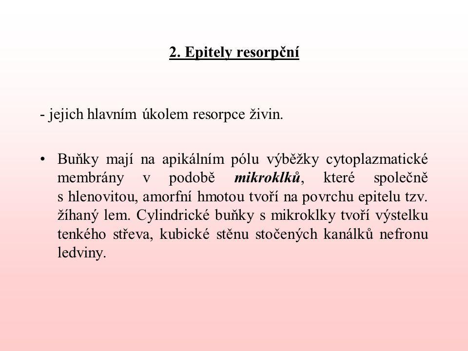 2. Epitely resorpční - jejich hlavním úkolem resorpce živin.
