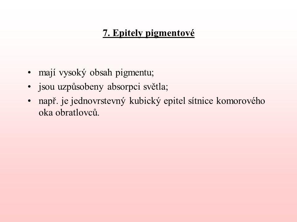 7. Epitely pigmentové mají vysoký obsah pigmentu; jsou uzpůsobeny absorpci světla;