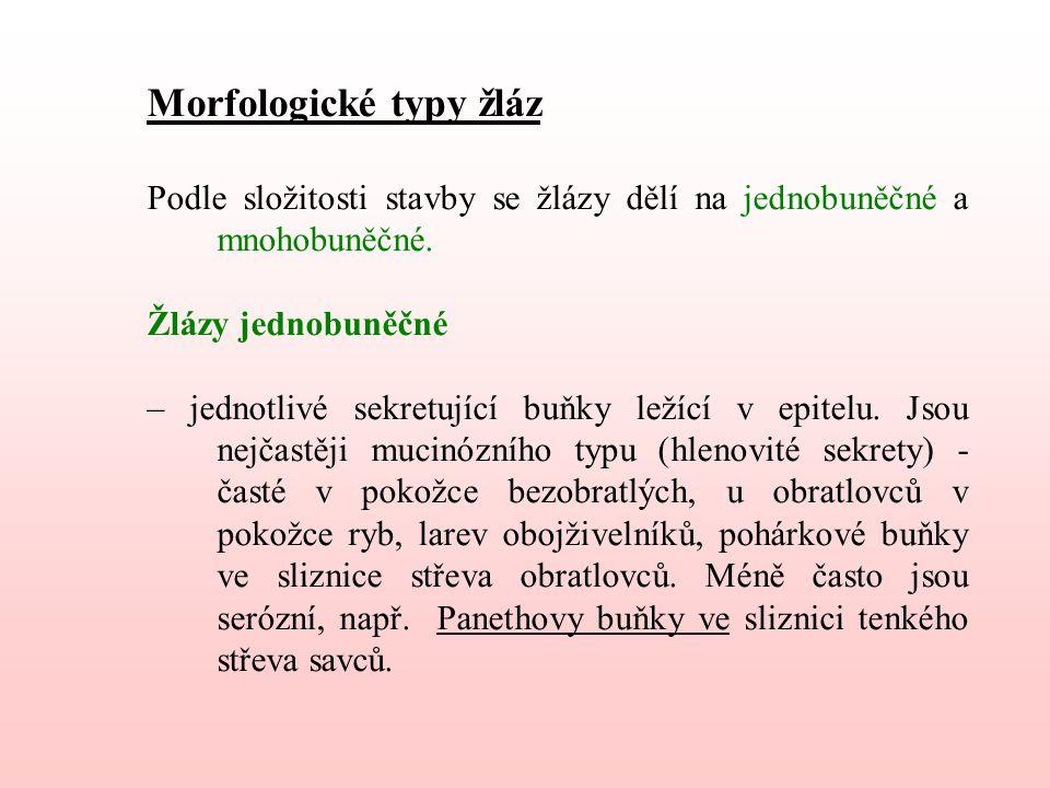 Morfologické typy žláz