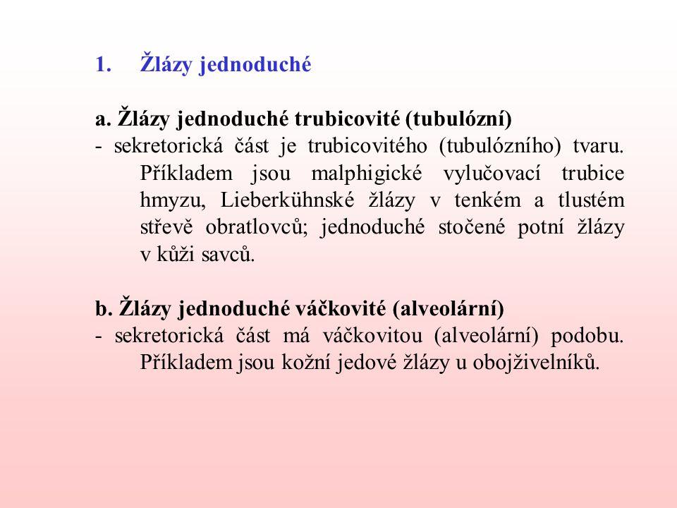 Žlázy jednoduché a. Žlázy jednoduché trubicovité (tubulózní)