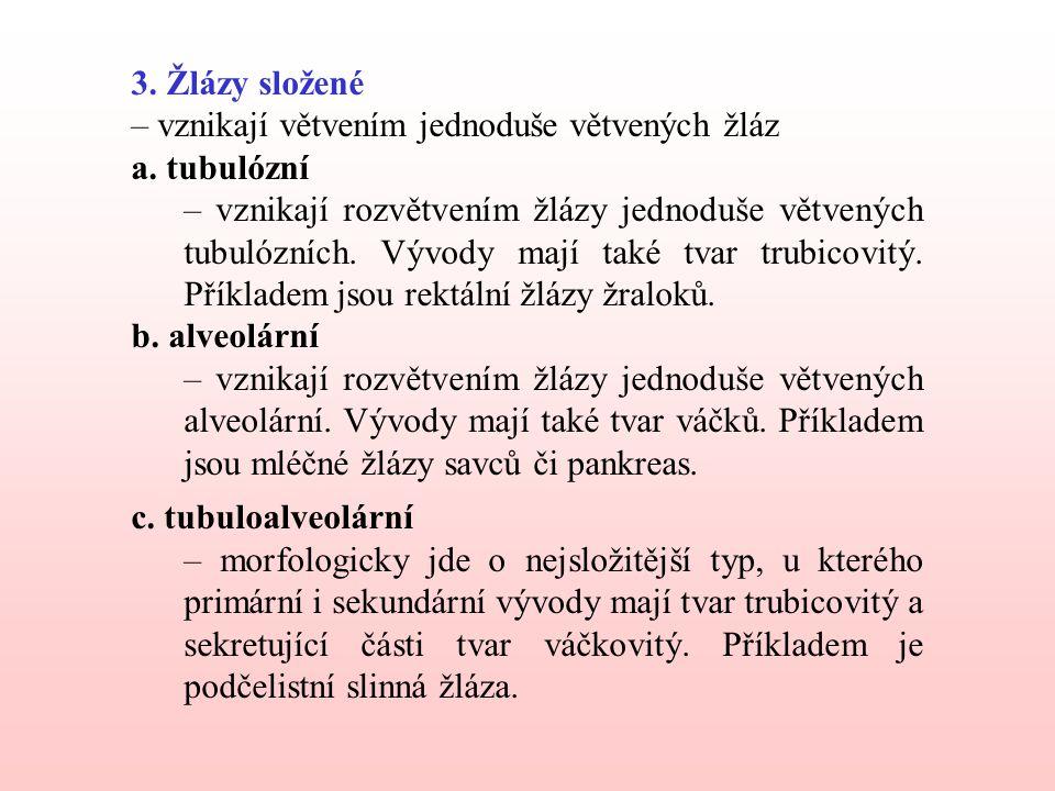 3. Žlázy složené – vznikají větvením jednoduše větvených žláz. a. tubulózní.
