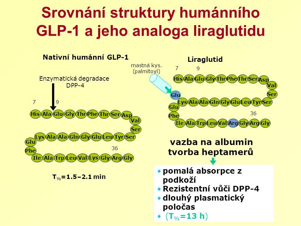 Srovnání struktury humánního GLP-1 a jeho analoga liraglutidu
