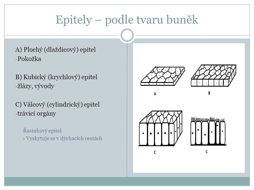 Epitely – podle tvaru buněk