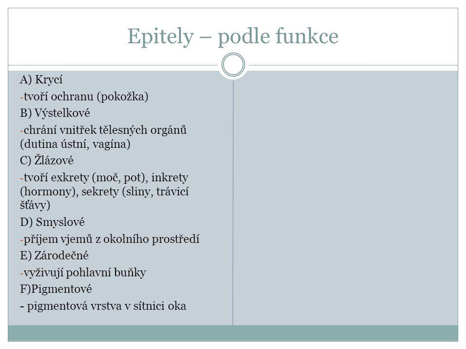 Epitely – podle funkce A) Krycí tvoří ochranu (pokožka) B) Výstelkové