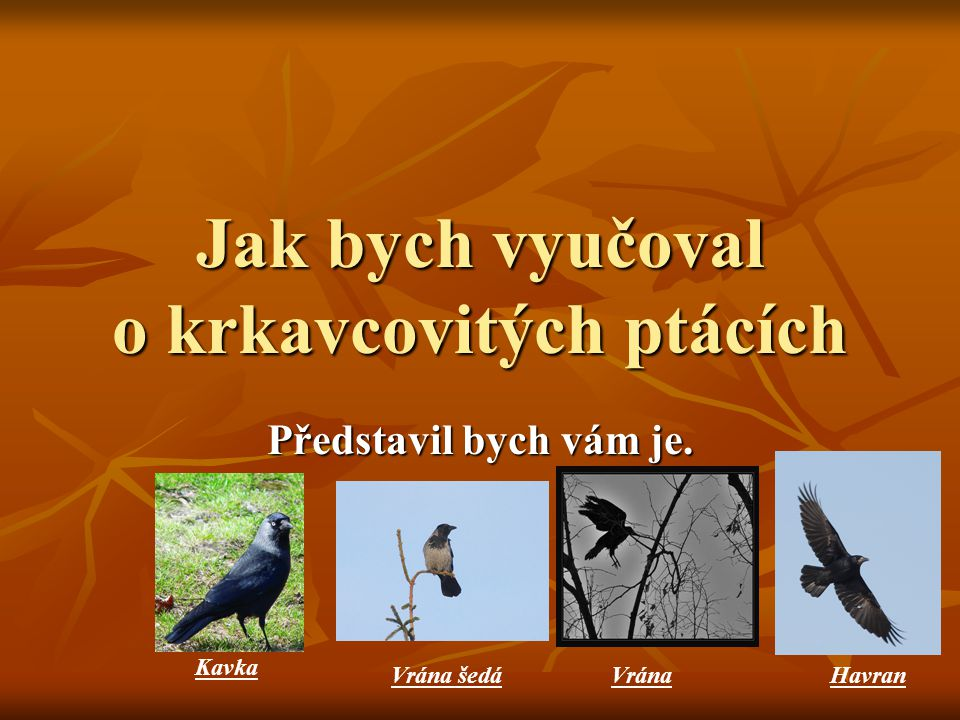 Jak bych vyučoval o krkavcovitých ptácích