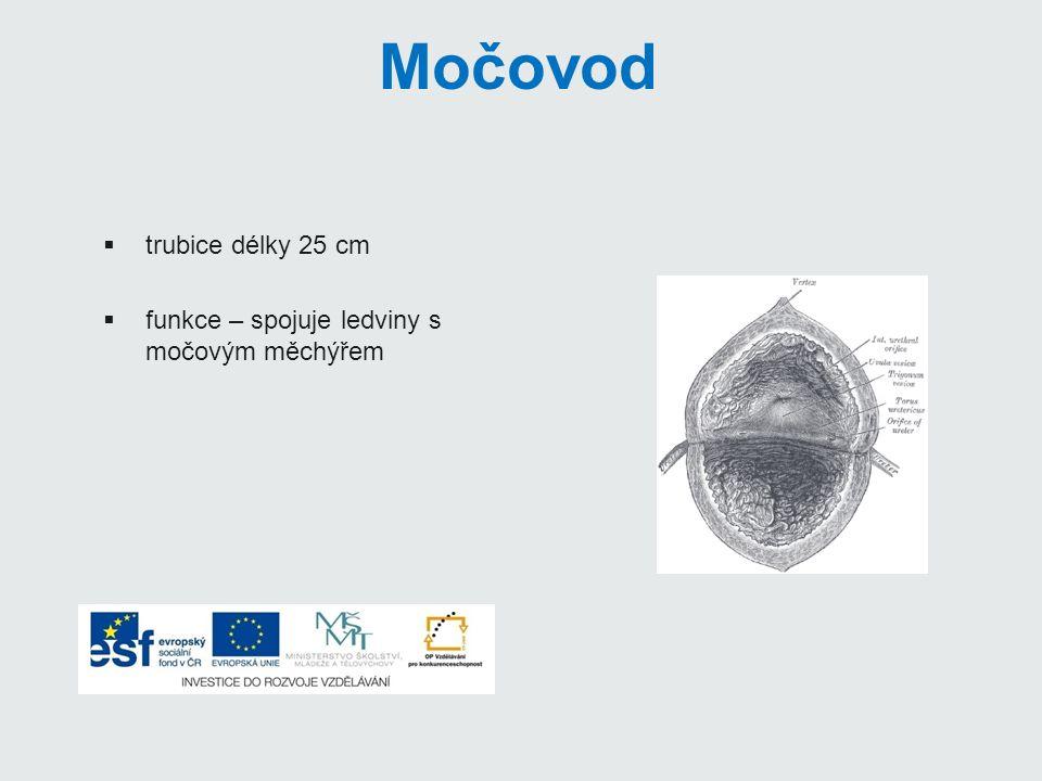Močovod trubice délky 25 cm