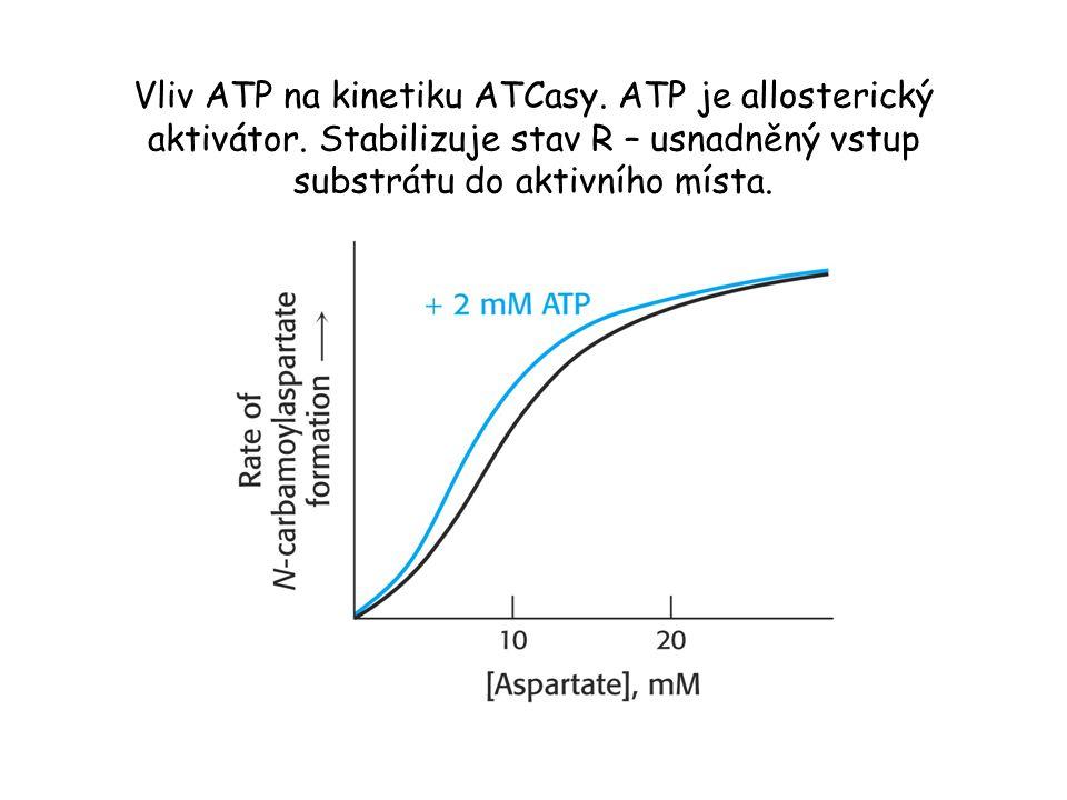 Vliv ATP na kinetiku ATCasy. ATP je allosterický aktivátor