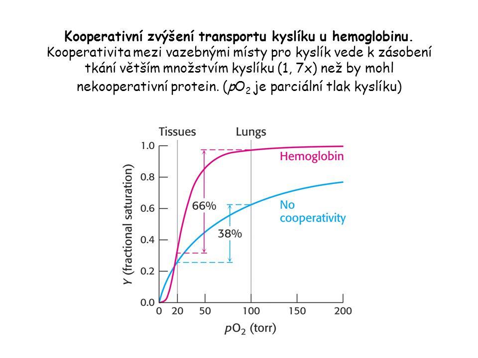 Kooperativní zvýšení transportu kyslíku u hemoglobinu
