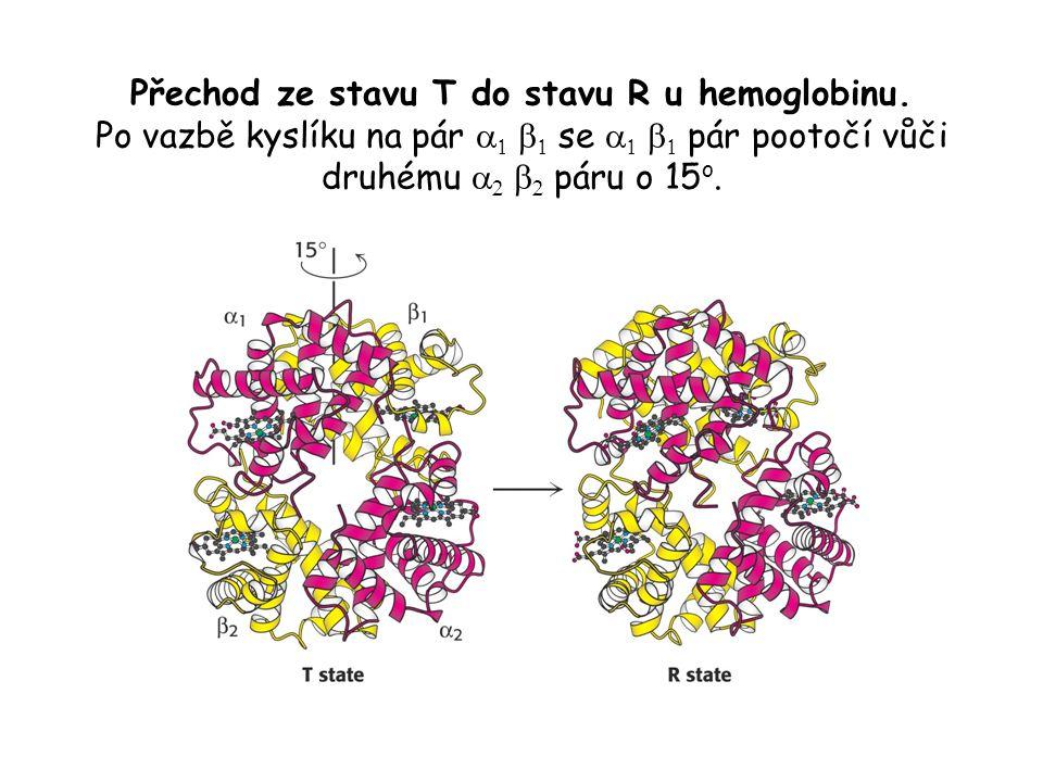 Přechod ze stavu T do stavu R u hemoglobinu