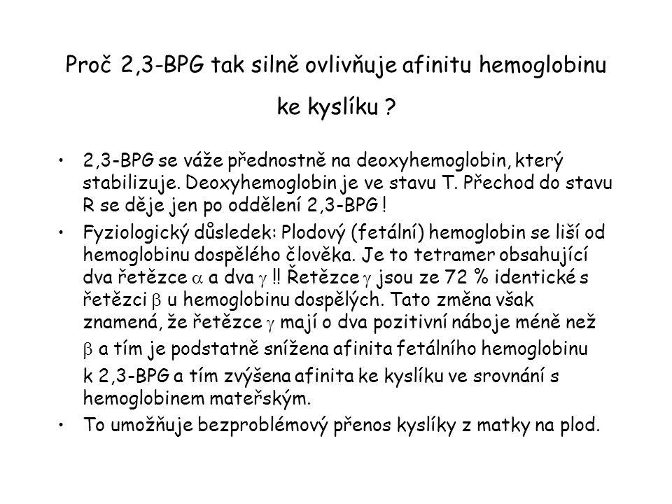 Proč 2,3-BPG tak silně ovlivňuje afinitu hemoglobinu ke kyslíku