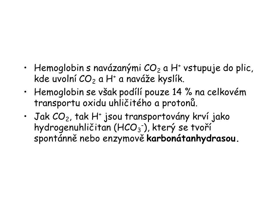 Hemoglobin s navázanými CO2 a H+ vstupuje do plic, kde uvolní CO2 a H+ a naváže kyslík.