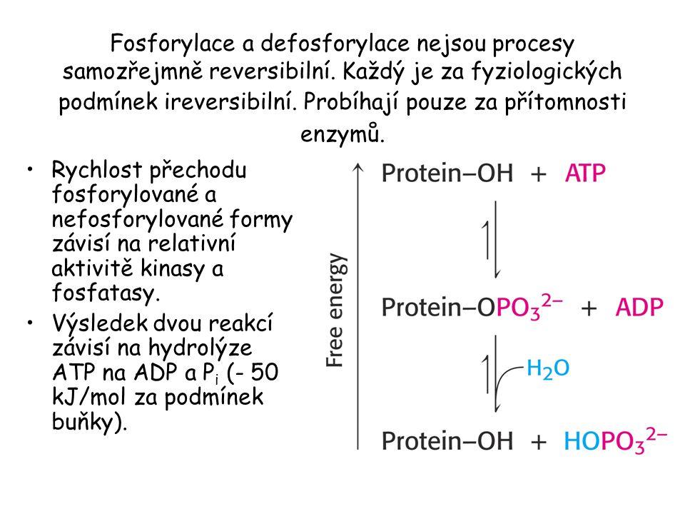 Fosforylace a defosforylace nejsou procesy samozřejmně reversibilní