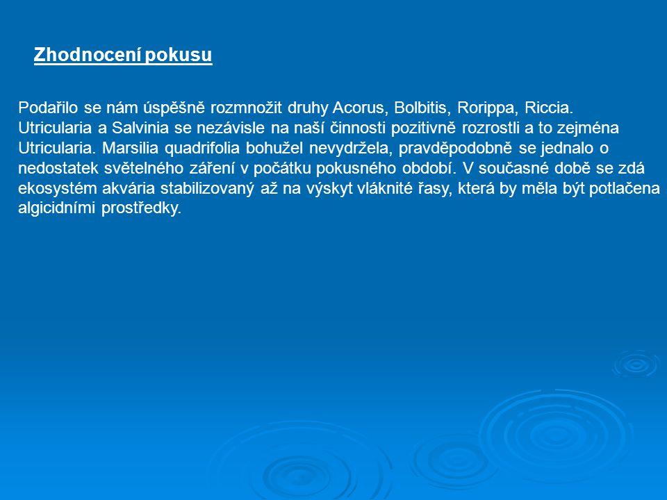 Zhodnocení pokusu Podařilo se nám úspěšně rozmnožit druhy Acorus, Bolbitis, Rorippa, Riccia.