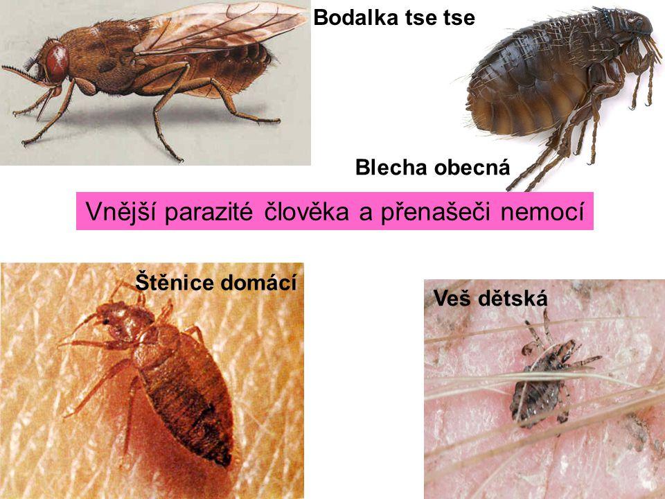 Vnější parazité člověka a přenašeči nemocí