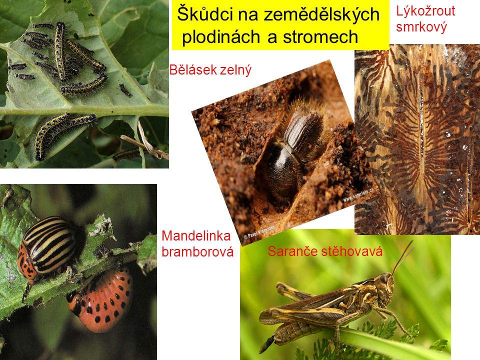 Škůdci na zemědělských plodinách a stromech