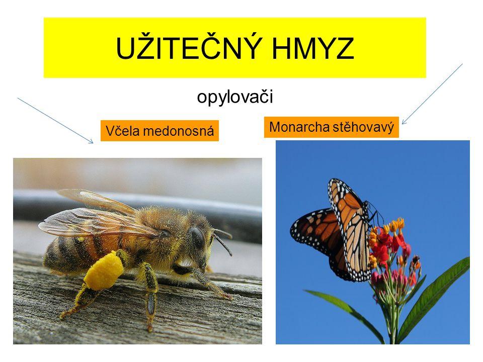 UŽITEČNÝ HMYZ opylovači Monarcha stěhovavý Včela medonosná
